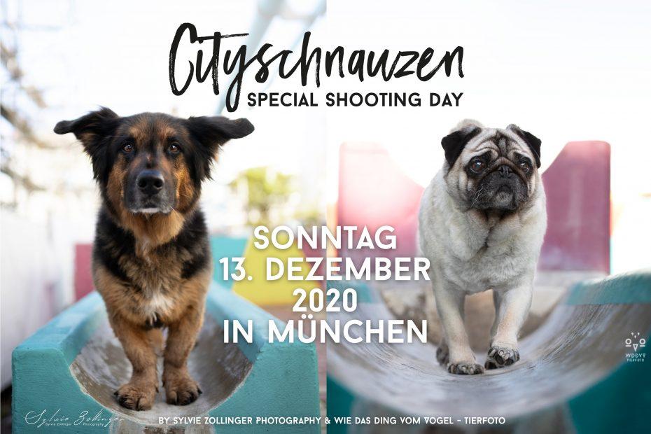 Wie das Ding vom Vogel Cityschnauzen Hundefotografie Tierfotografie München Stadt