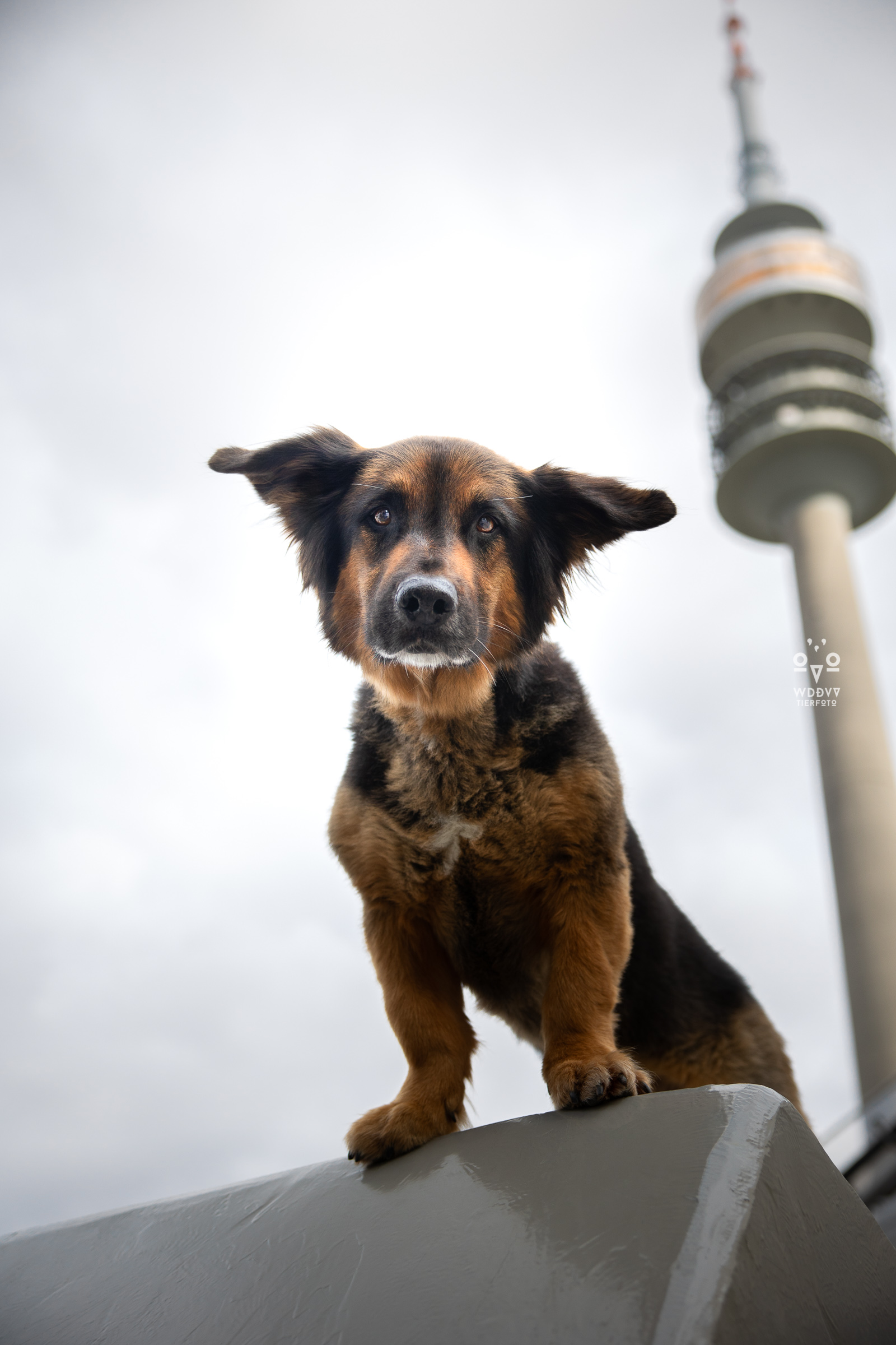 Wie das Ding vom Vogel Hundeshooting Tiershooting München Cityschnauzen