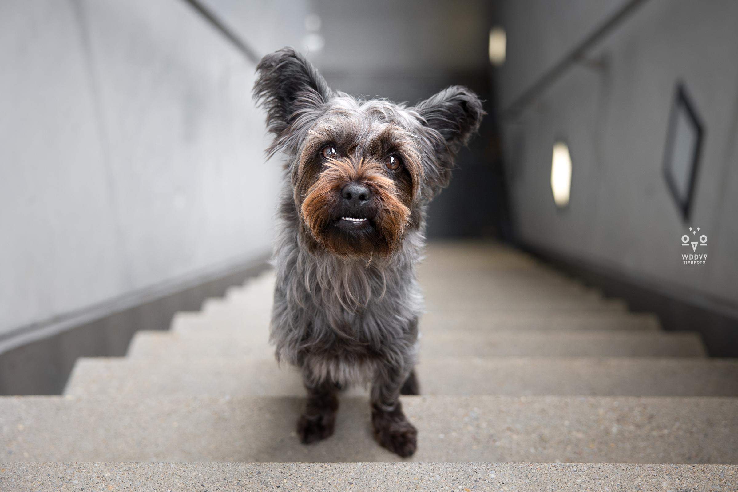 Wie das Ding vom Vogel Hundeshooting Tiershooting München Cityshooting Treppe
