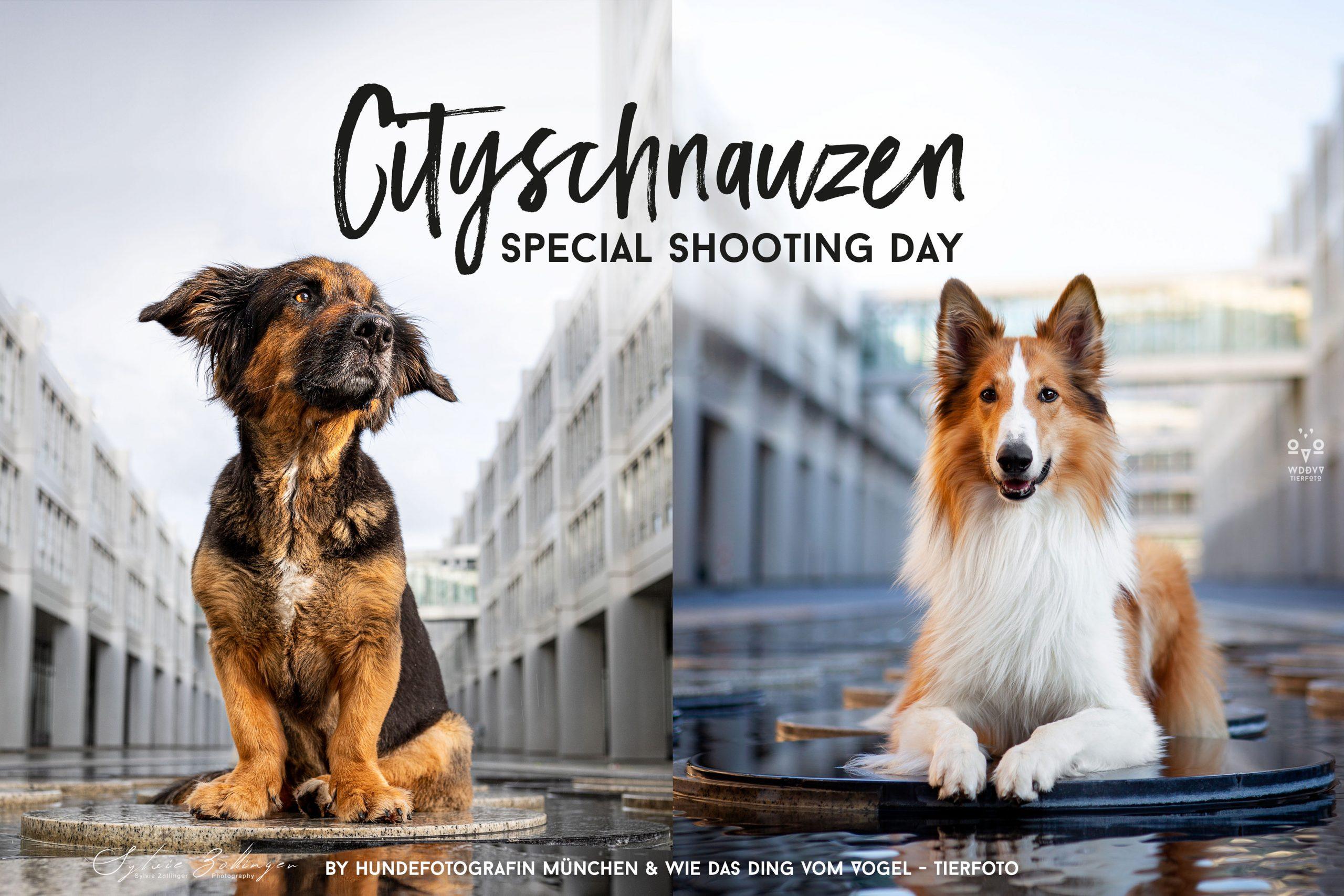 210407_Header_Cityschnauzen_web